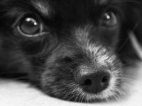 pelíšky pro psy
